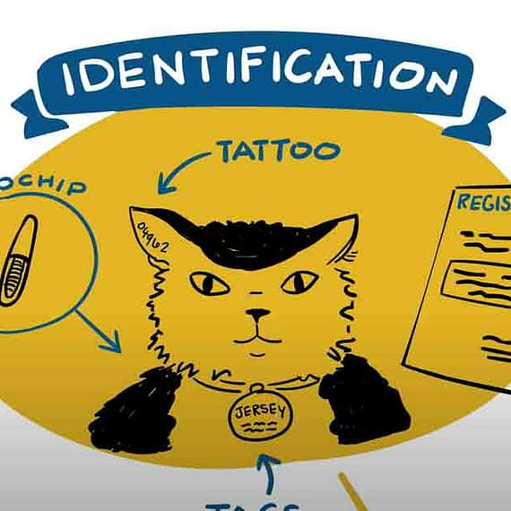 Different identification for cats shown as microchips, tattoos, tags, and up to date registration.