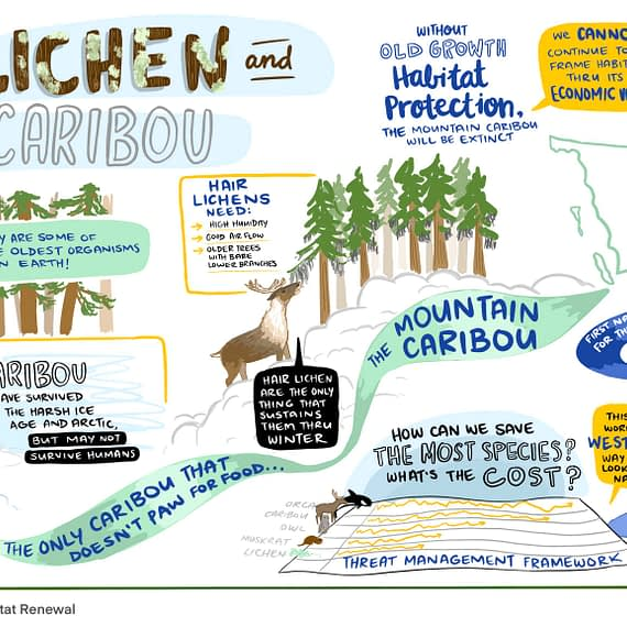 caribou habitat restoration graphic recording, live scribing, caribou graphic recording, visual summary of caribou, mountain caribou, british columbia caribou, lichen and caribou, graphic facilitation