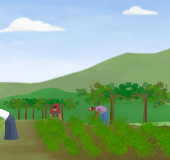 explainer video on agriculture, agriforce animation, greenhouse food animation, explainer video