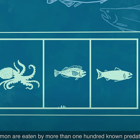 Hand drawn slot machine showing different ocean animals in each slot, conveying that gambling with nature is not an effective strategy.