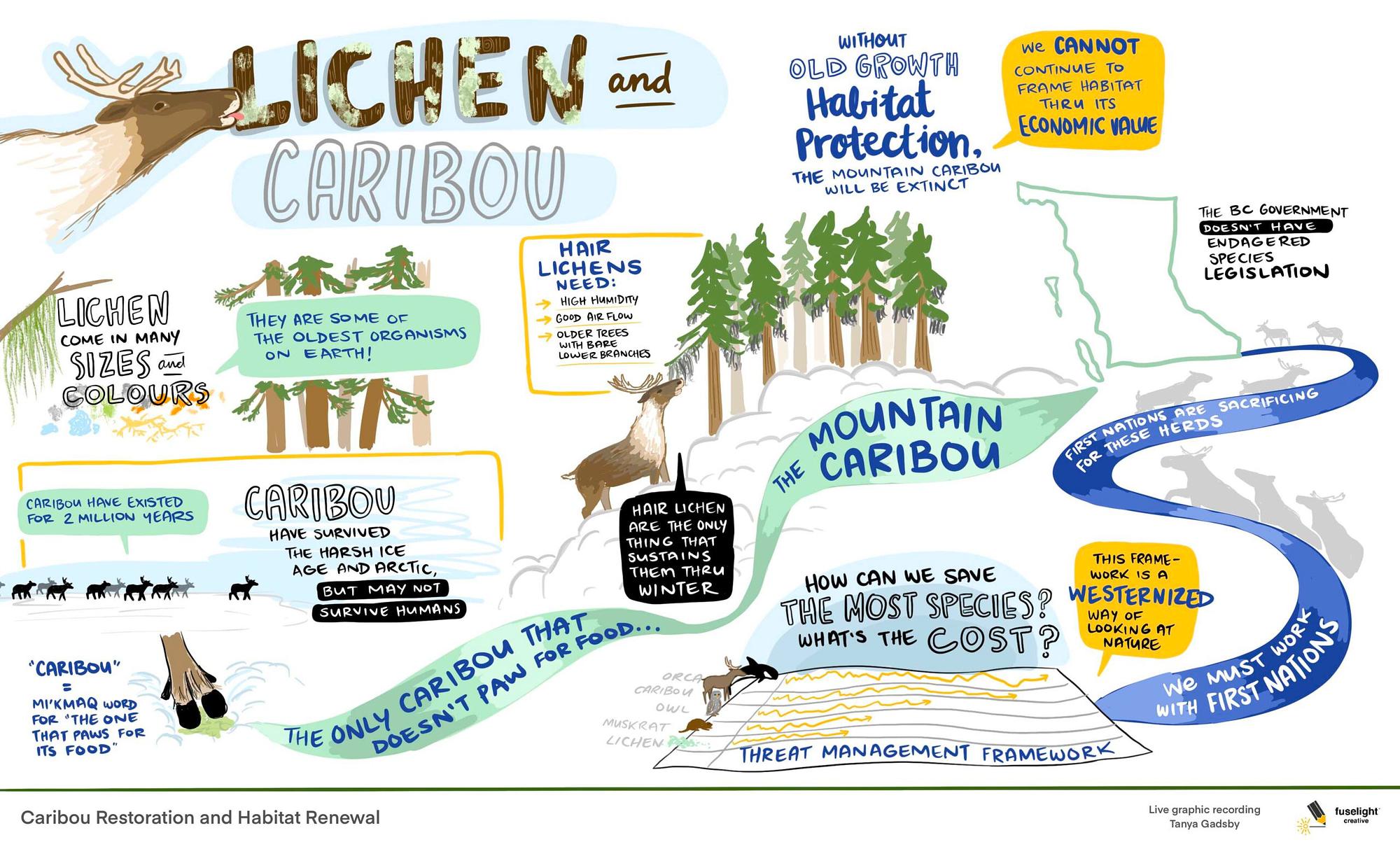 caribou habitat restoration graphic recording, live scribing, caribou graphic recording, visual summary of caribou, mountain caribou, british columbia caribou, lichen and caribou, graphic facilitation