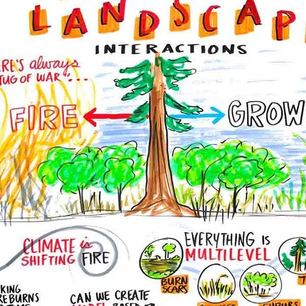graphic recording, wildfire graphic recording, landscape of fire, graphic facilitation forestry, forest sustainability, visual scribe